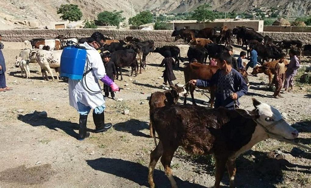 مبارزه با تب کنگو در افغانستان شروع شد