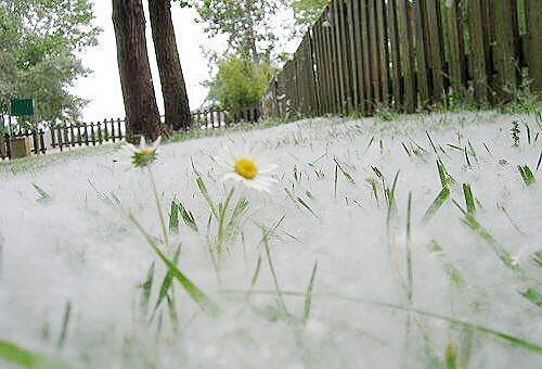 فیلم ، برف تابستانی در مسکو