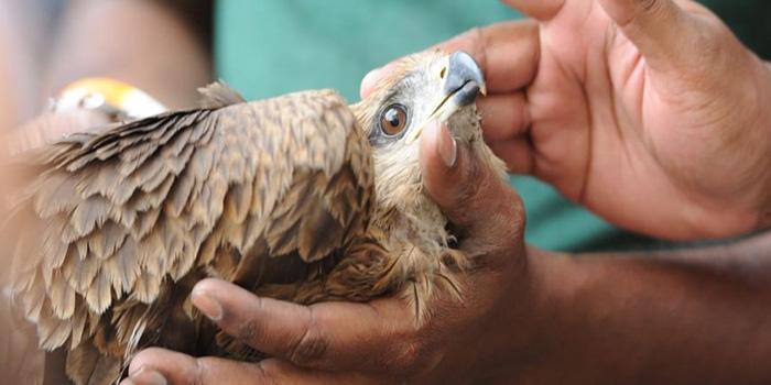 اقدامات اولیه و فوری برای مراقبت از پرنده بیمار (صدمه دیده)